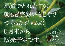 レッカーバロンの尾道産いちじくジャム 次回は2019年8月末発売予定