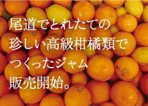 瀬戸内尾道で取れた珍しい柑橘類でつくったジャム販売開始