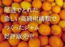 瀬戸内尾道で取れた珍しい柑橘類でつくったジャム販売中