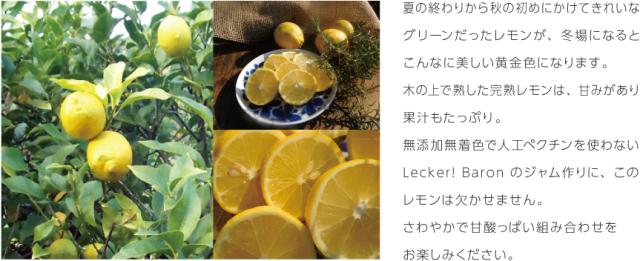 LB_sozai_lemon01-3.png