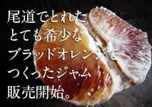 レッカーバロンの尾道産ブラッドオレンジのジャム新発売!